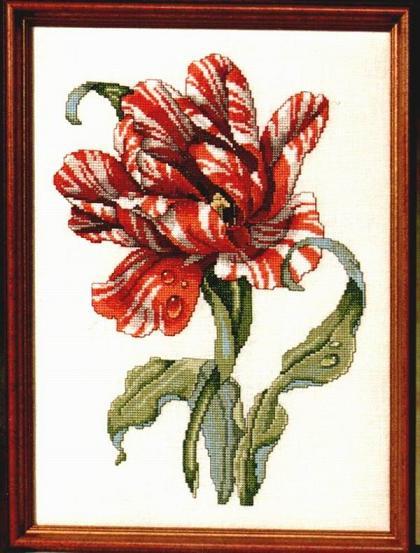 Категория.  Просмотров: 276 Дата.  14.11.2011. Вышивка крестиком - Полосатый тюльпан.